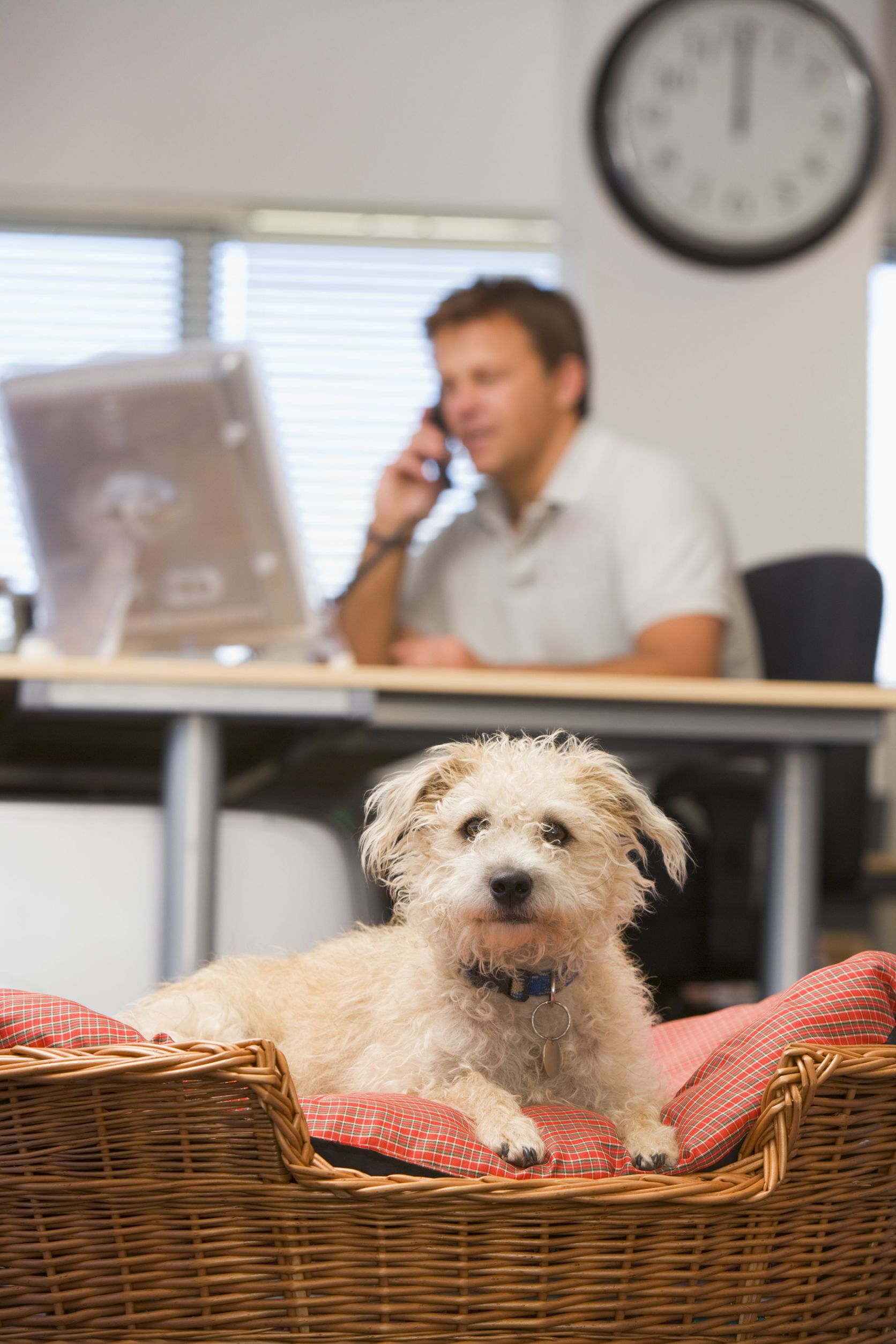 The Perks of a Pet-friendly Workplace